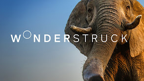 Wonderstruck thumbnail
