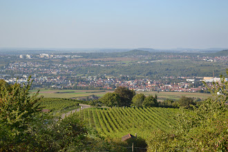 Photo: Wine tasting & vineyard tour at Karlstein vineyards and dinner at Weinstube Muz , Esslingen Germany