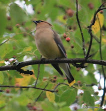 Photo: A bird on a branch at Brighton State Park by Karl Hubbard