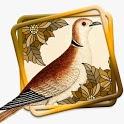 Kicau Perkutut Master ( Beautiful Turtledove) icon