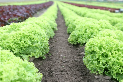 Organic Share Farming or Lease 50km North of Melbourne