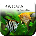 Angels in Paradise - Angelfish icon