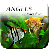 Angels in Paradise - Angelfish