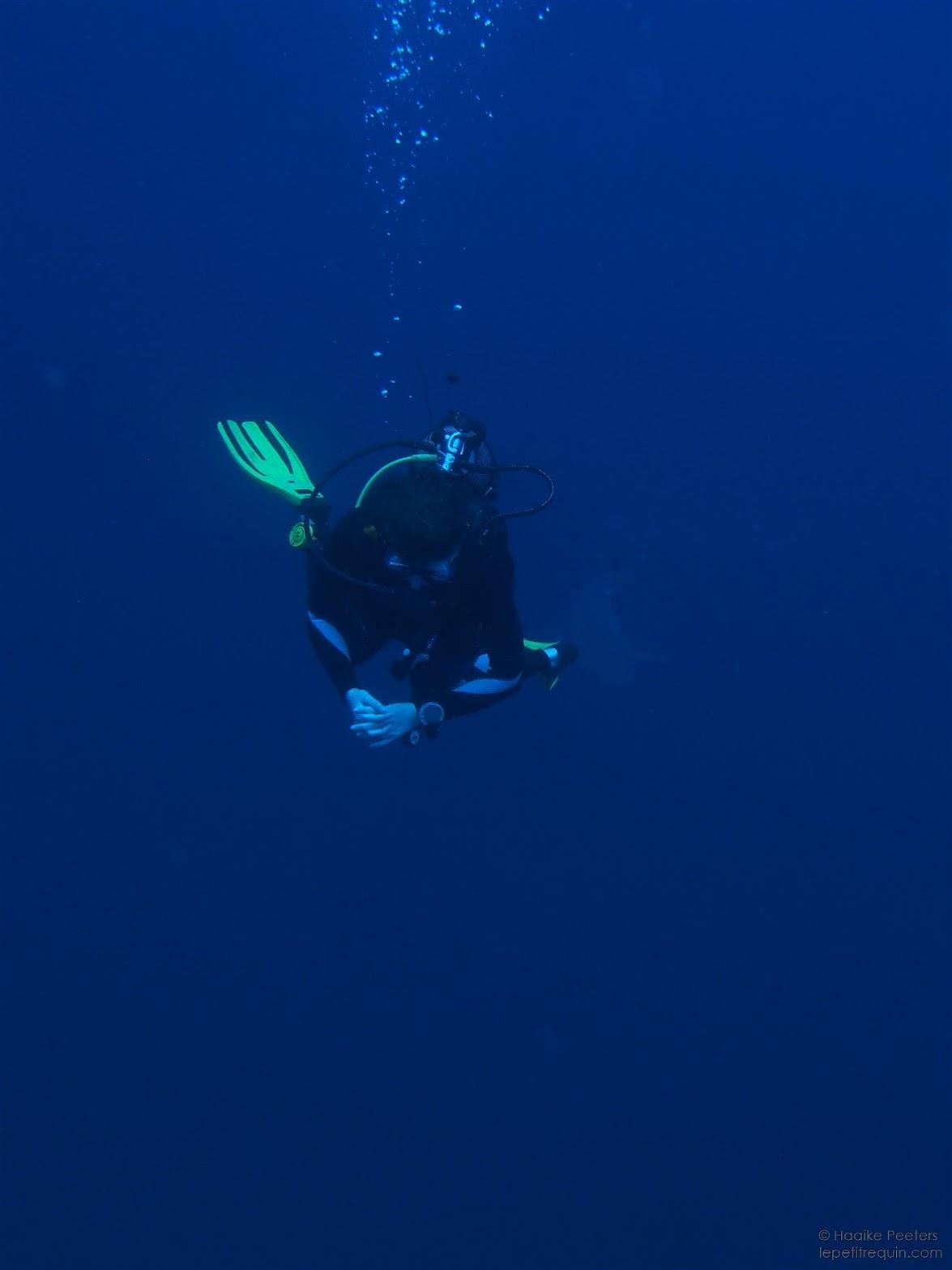 Indische Oceaan (Le petit requin)