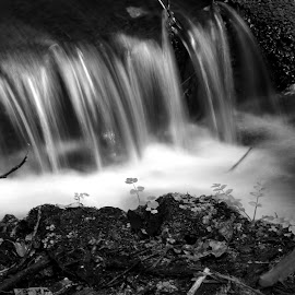 Waters by Gil Reis - Black & White Landscapes ( rivers, waters, nature, bio, forests, life )