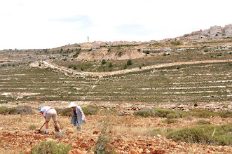 Photo: Working with the Jewish settlement Neve Daniel in the background
