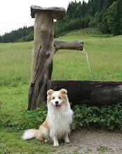 Photo: Rittisberg wandeling    Ganim