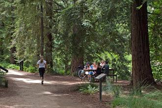 Photo: Arboretum Redwood Grove