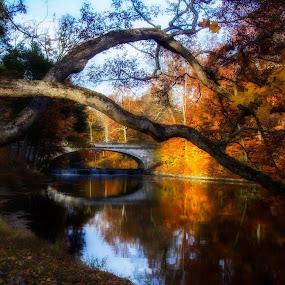 Vanderbilt Estate by Carolyn Odell - City,  Street & Park  City Parks (  )