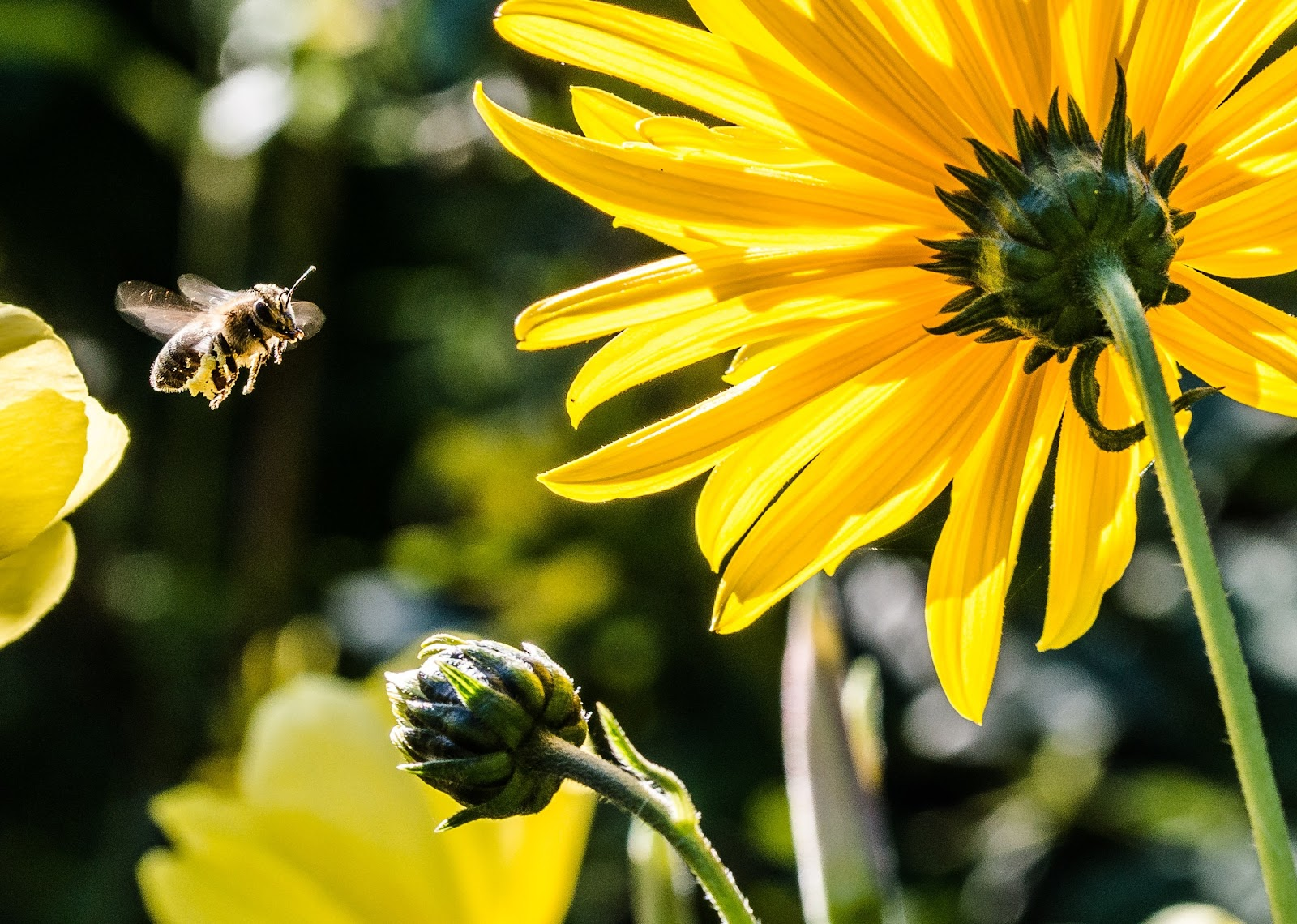 Bees to Flowers