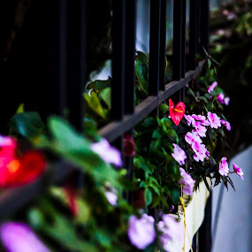 The mystic moment by Nilkamal Laskar - Nature Up Close Gardens & Produce