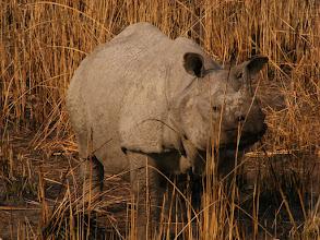 Photo: Rhinos of Kaziranga!
