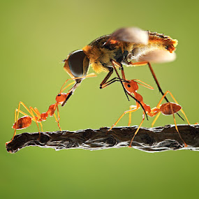 team work by Shikhei Goh II - Animals Insects & Spiders