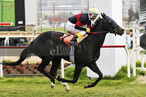 Hamsaat Madame (Shanghai Bobby) brilla en Condicional (1000m-Pasto-VSC). - Staff ElTurf.com