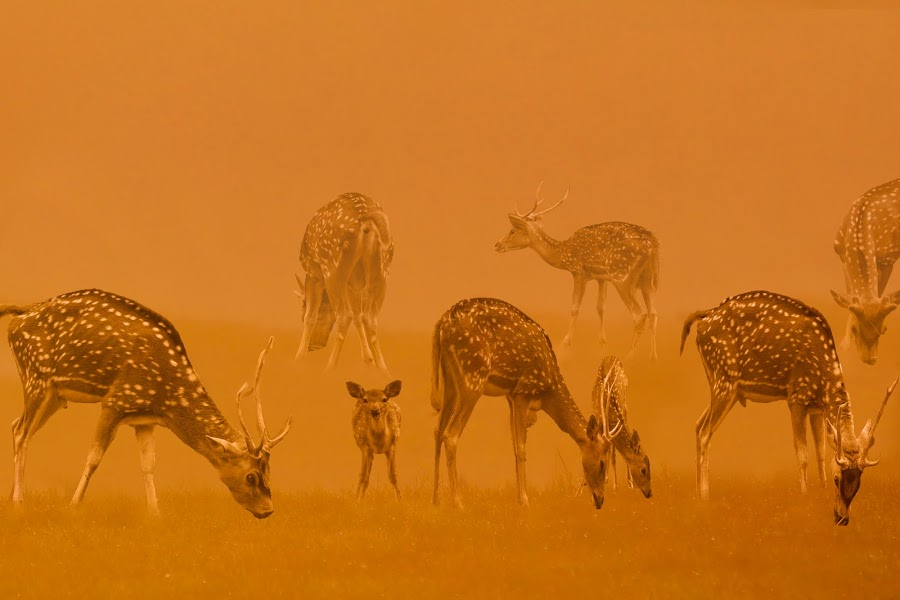 by Hendrik Cuaca - Animals Other