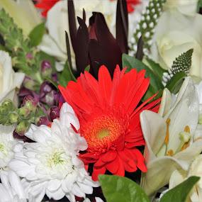 Flower Bunch by Luciana Popa - Flowers Flower Arangements ( #flowers, #photo, #bouquet, #flowerbunch, #flowerbouquet, #photography, #bunch, #flower )