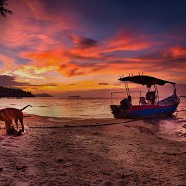 Boat at dawn by Adrian Choo - Transportation Boats ( seaside, beach, dawn, clouds, dog, boat, colors )