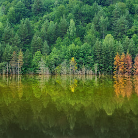 Green is life  by Hurghis Vasile - Landscapes Waterscapes ( water, nobody, reflection, nature, waterscape, colors, reflections, romania, tourism, forest, travel, waterfront, natural )