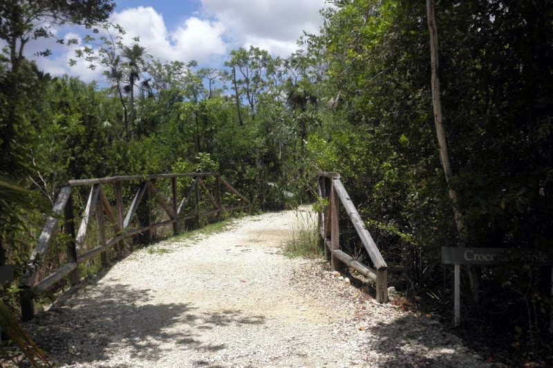 Photo: #5 Crocodile Hole, Woodland Trail.  Fossil bones of the Cuban Freshwater Crocodile were discovered in this wetland. Aug.18, 2013