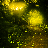 Fireflies Live Wallpapers