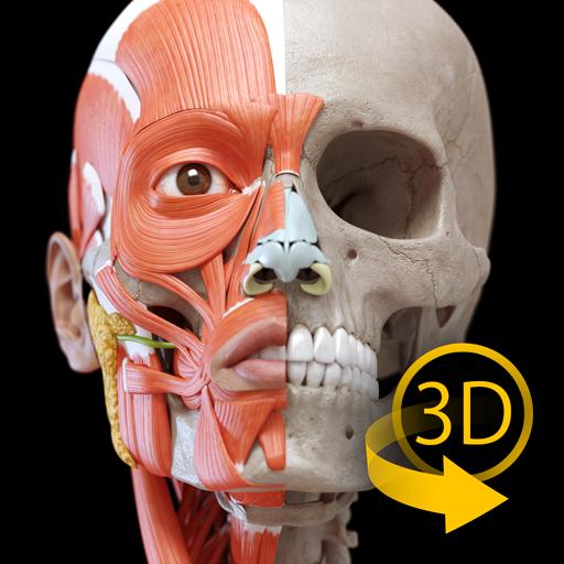 Muscle | Skeleton - 3D Anatomy (app)
