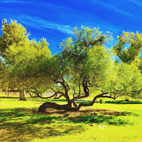 Beautiful Tree by Diane Garcia - Landscapes Prairies, Meadows & Fields (  )