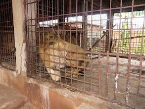 Photo: en cage, ce n'est pas une réserve...
