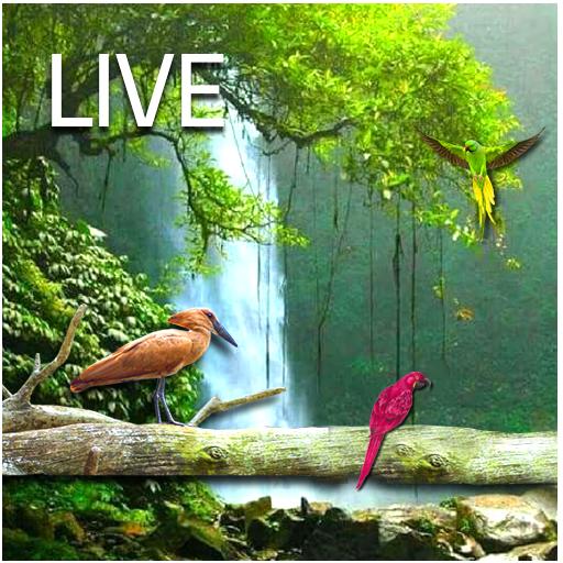 Water Falling live HD Wallpaper app