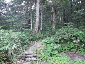 ここから本格的な登山道