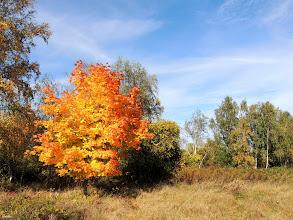 Photo: runaway  for #treetuesday (+Tree Tuesday) curated by +Shannon S. Myersand +Christina Lawrie for #photoextractplus by +Jarek Klimek for #fotoamateur (+Fotoamateur) by +Markus Landsmann// +Karsten Meyer// +Scotti van Palm// +Remo Primatesta