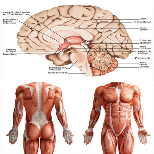 Anatomy New plus ++