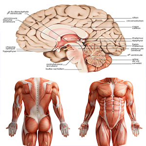 Anatomy New plus ++