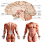 Anatomy New plus ++ file APK for Gaming PC/PS3/PS4 Smart TV