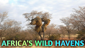 Africa's Wild Havens thumbnail