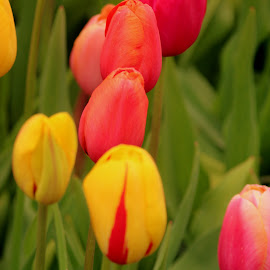 by Steve Tharp - Flowers Flower Gardens