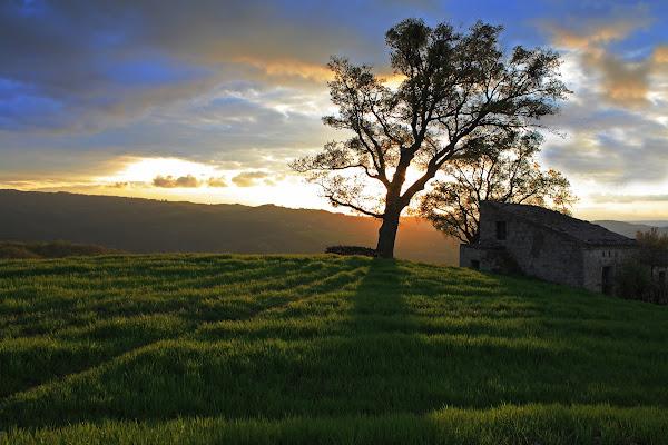 l'albero che guarda il tramonto di rino_savastano