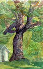Photo: 1999 Maggie's oak in fall. McFarland, WI. Watercolor.