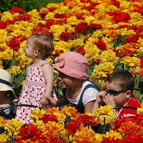 Tulip Festival Candid by Wayne Paton - Babies & Children Children Candids ( children, festival, flowers tulips )