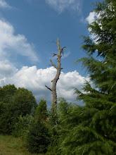 Photo: Сухото дърво