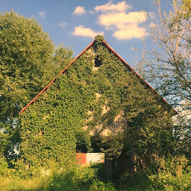 Cool Barn by Debra Summers - Nature Up Close Other Natural Objects ( moss, barn, grass, trees )