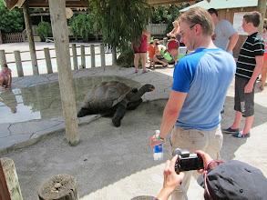 Photo: Big turtle/tortoise
