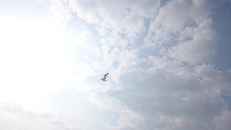 Le ali della libertà  di RaffaeleDellaMura