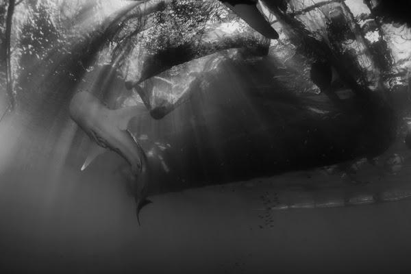 Underwater Rays di Andrea Izzotti