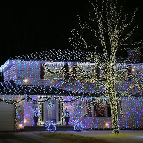 All Decked Out by Sean Leland - Public Holidays Christmas ( home, yard, tree, house lights, xmas, christmas lights, christmas,  )
