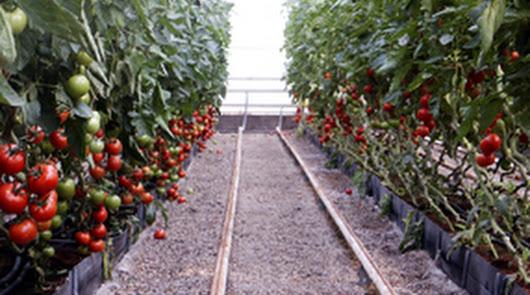 La UAL pone en valor académico internacional el 'Modelo Almería' de cultivos