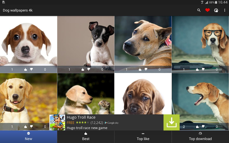 Dog Wallpaper 4k Apl Android Di Google Play