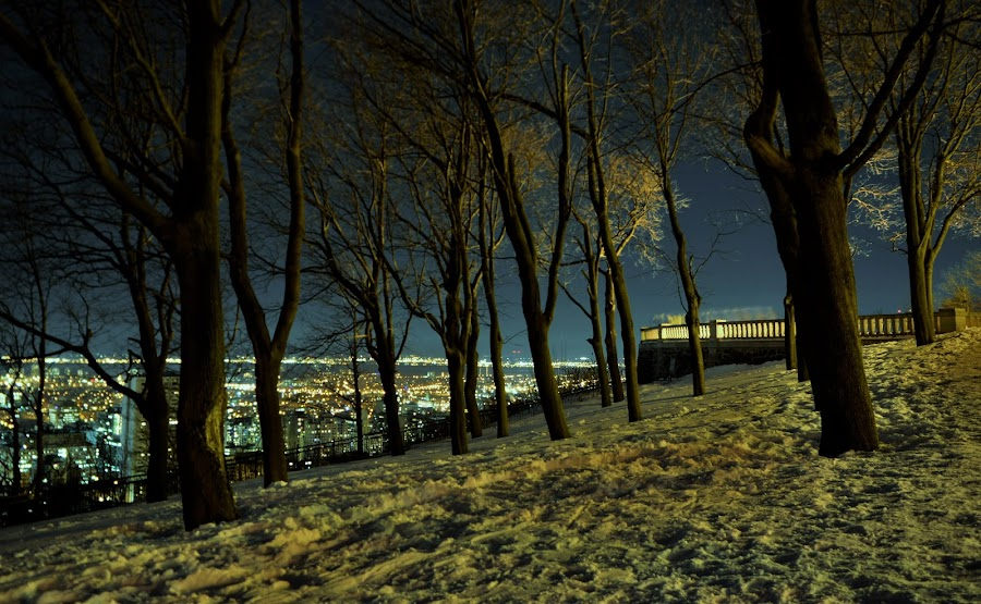 City life by Mario Monast - City,  Street & Park  City Parks ( cityscapes, night scene, city, nightscape, lights, winter, night photography, parks, snow, nighttime, city lights, trees, night, night shot )