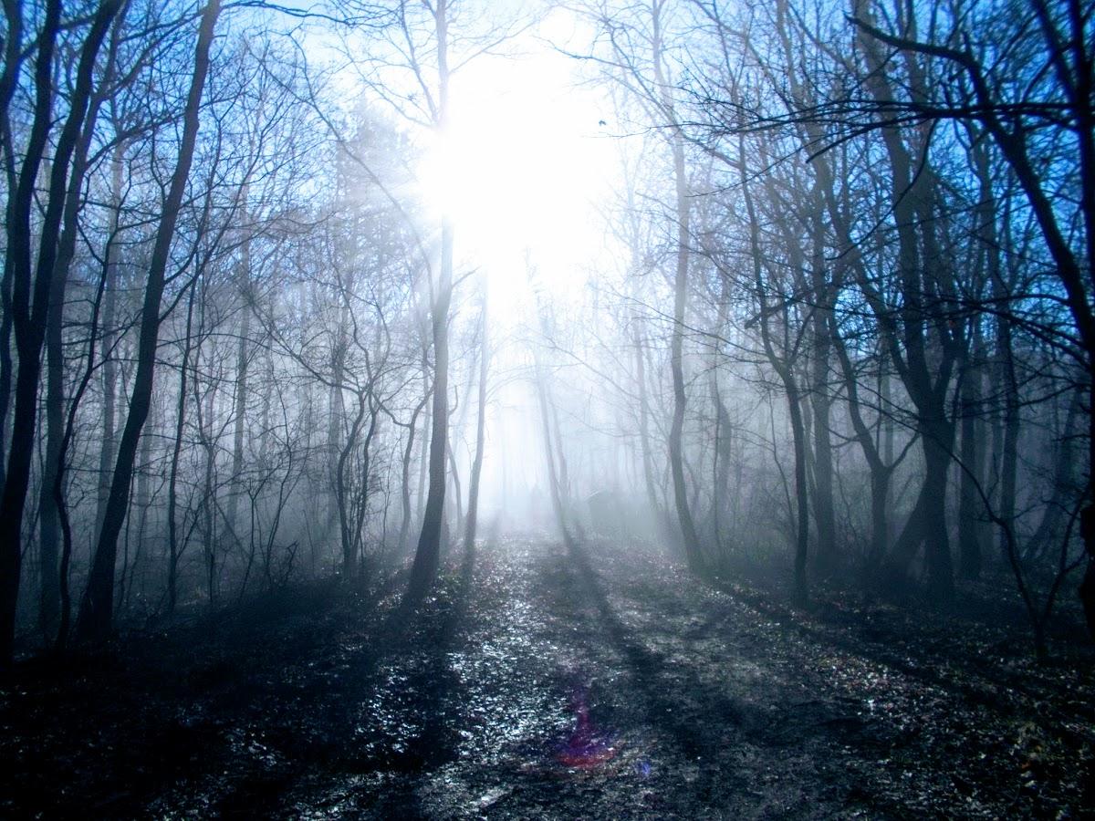 Ködös reggel a Budai-hegységben. Fotó: Tóthné Szűcs Ágnes (Facebook)