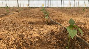 """Ifapa en colaboración con Novihum Soil Technologies organiza la jornada \""""Mejorando el suelo\"""""""