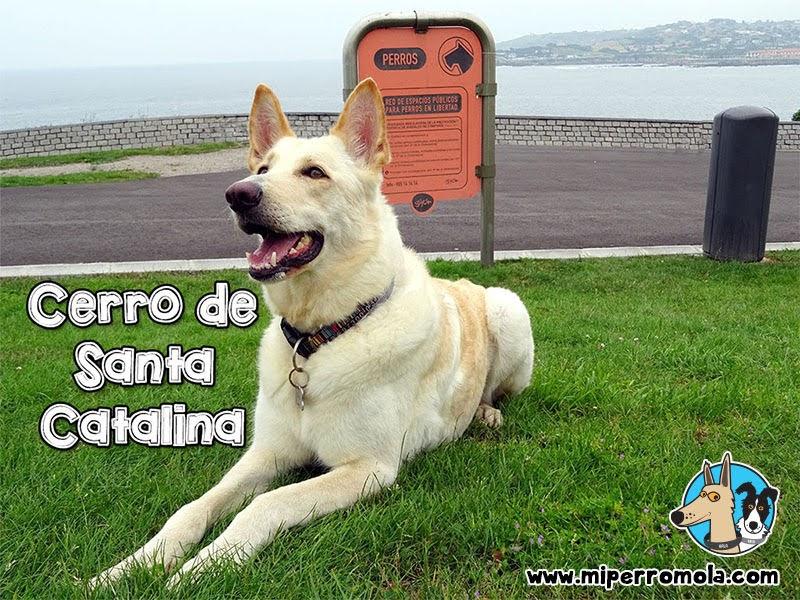 Senderismo con Perro, El Cerro de Santa Catalina en Gijón, Can de Palleiro y Border Collie